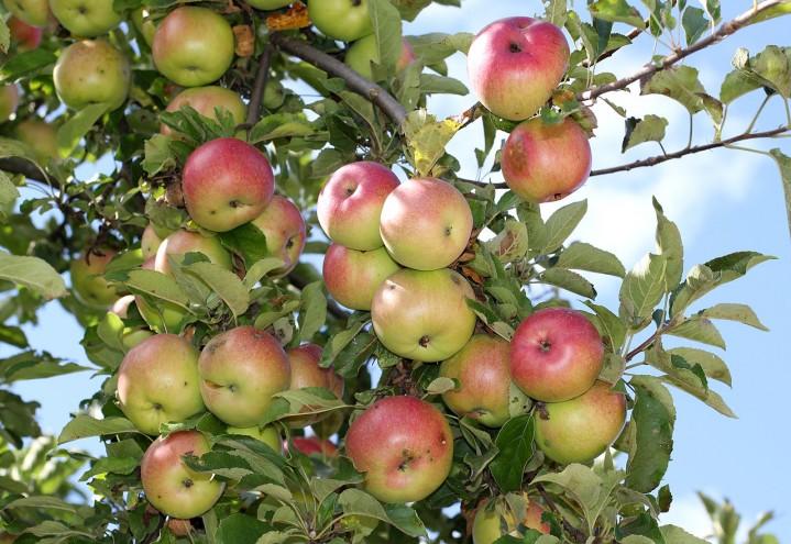 Krever storsatsing på norske grønnsaker, blomster, bær og frukt