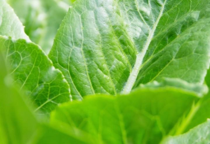 Ny veileder til forskrift om plantevernmidler