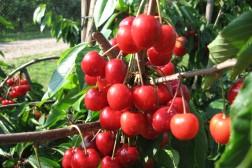 Statens tilbud: 90 millioner for jordbruksoppgjøret