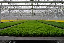 Grøntnæringen i den nye landbruksmeldingen