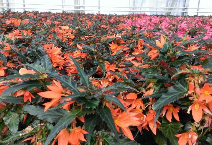 KSL Blomster og planteskole
