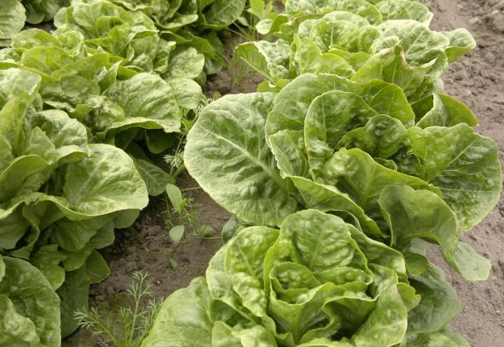 Endring i kriterie for søknad om innreise til grøntnæringen