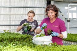 Utenlandske ansatte kan få innreise i Norge – også fra land utenfor EØS