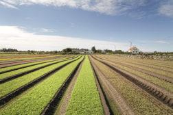 NGFs innspill til Jordbruksforhandlingene 2017