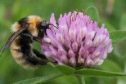 Nasjonal strategi for pollinatorer