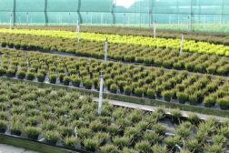 Planteskole