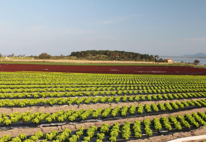 Jordbruksavtalen 2020 lagt frem i dag