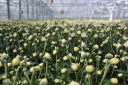Blomsterutsalg under 250 kvadratmeter får åpne, fra midnatt natt til 16. april