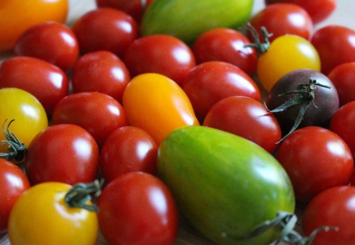 Frustrasjon i tomatmiljøet
