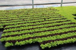 Teknologi for grøntnæringen