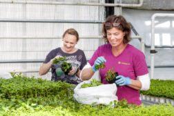 Nytt utvalg for gartnerutdanning og rekruttering