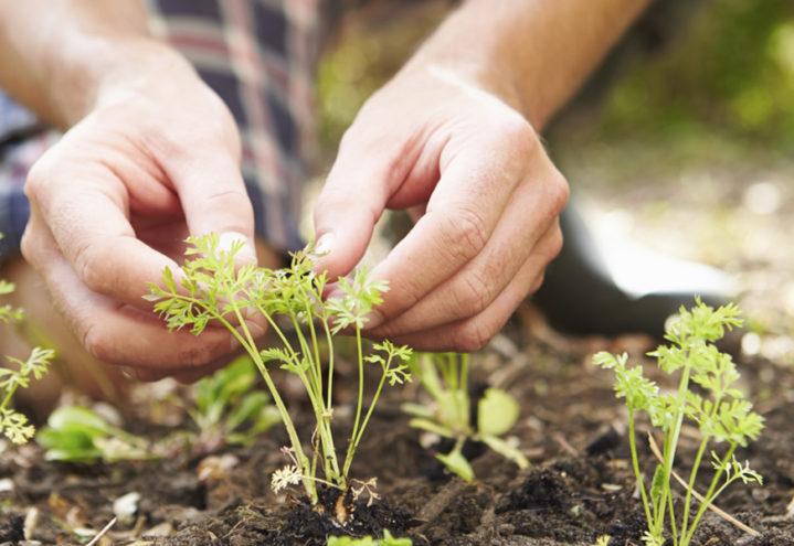 Gjennomslag for nytt gartnerutdanningsløp!