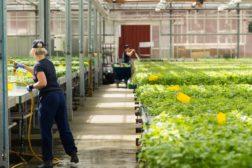 Støtte til videre løft av bonden som arbeidsgiver