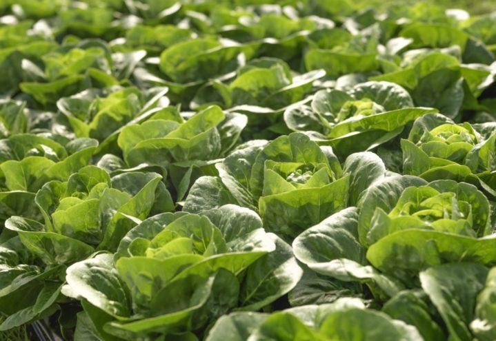Bøndene krever 2,1 milliarder i jordbruksoppgjøret