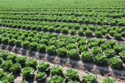 Grøntsektoren er en vinner i årets jordbruksforhandlinger