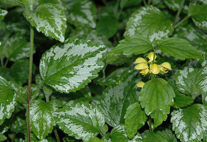 Kan skape problemer for planteskolene