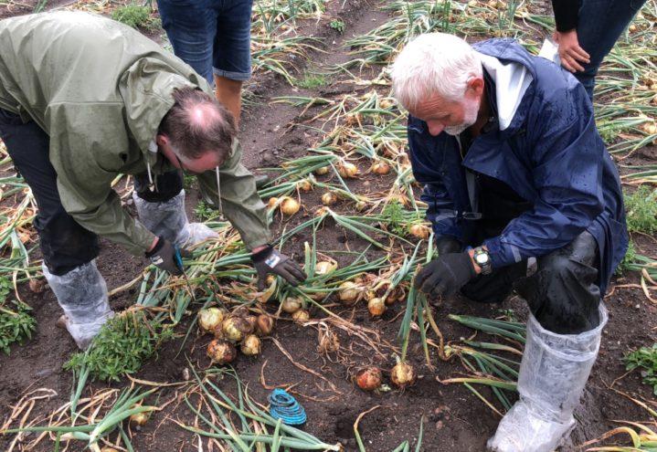 Mulig avlingsskadeerstatning for grøntprodusentene