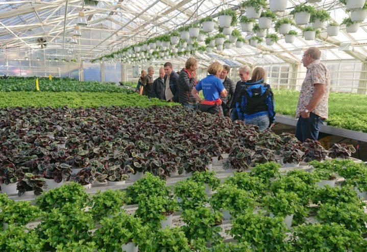 Tester ut nye potteplanter i gartneriene