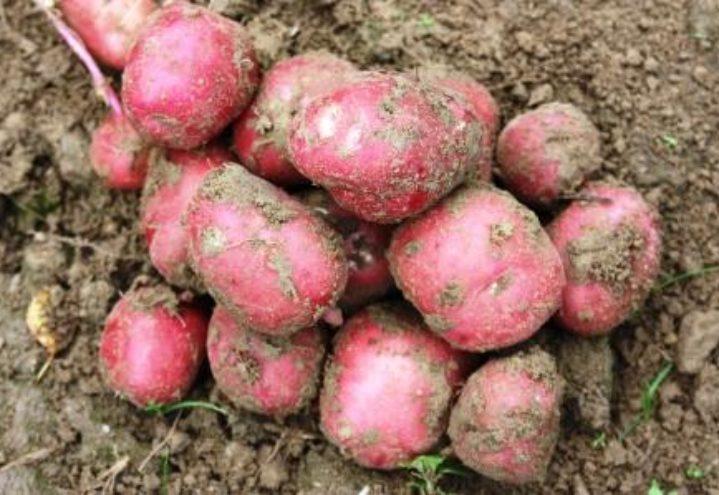 Ny risikoavlastning for grøntprodusentene- må gjelde hele grøntnæringen