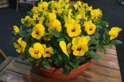 Handler blomster og planter som før