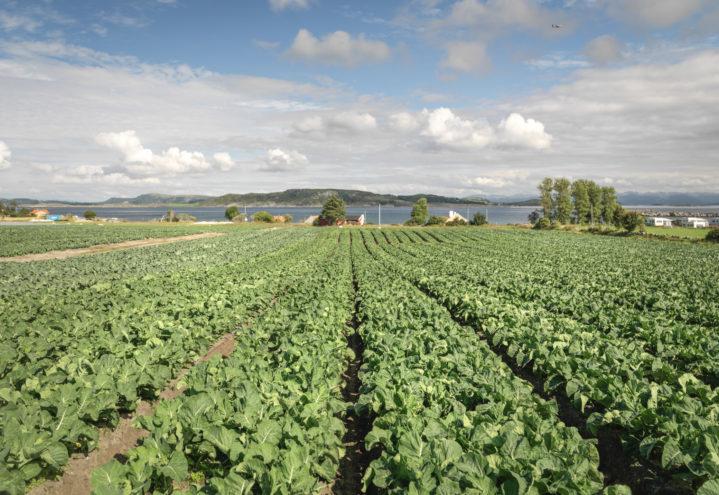 Nytt prosjekt skal øke rekrutteringen til gartnerfaget.