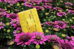 Planteimport og skadegjørere