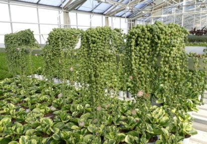 Ny rapport fra NIBIO om hagebruksnæringen