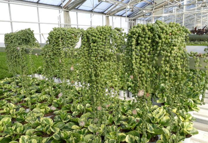 Statens hjelpetiltak – kort oppsummering til gartneri- og hagebruksnæringen