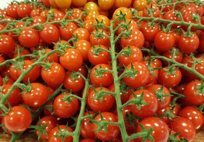 Smakfulle, sommerlige tomater