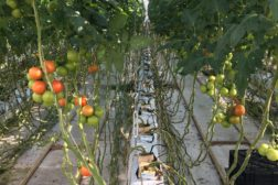 Gartnere rammes av effekttariffer