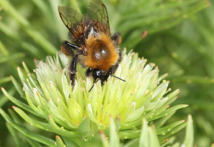 Pollinerende insekter i landbruket – godt for naturen og godt for deg