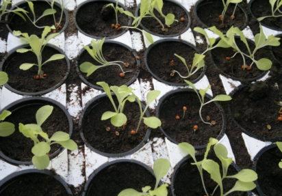 Savner satsning på grøntsektoren i Hurdalsplattformen
